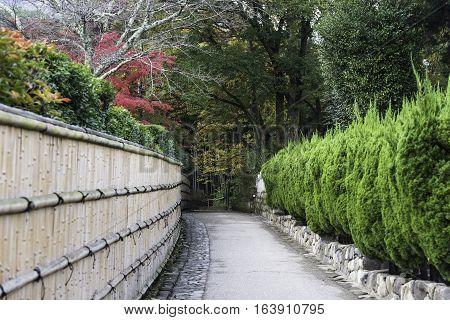 Walkway bamboo Grove at Arashiyama in Kyoto Japan.