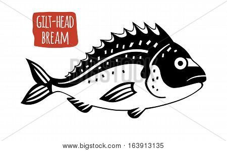 Gilt-head bream, black and white vector illustration, cartoon style