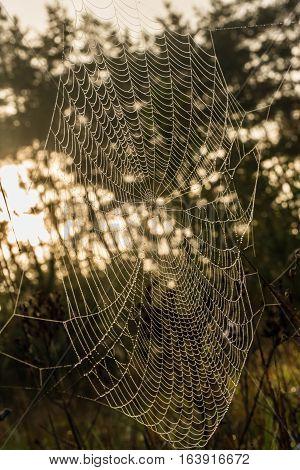 Dewy cobweb on the dark forest background
