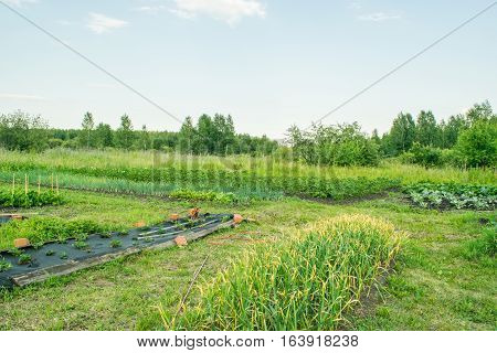 Beds with strawberries and vegetables at early spring Russia The Urals