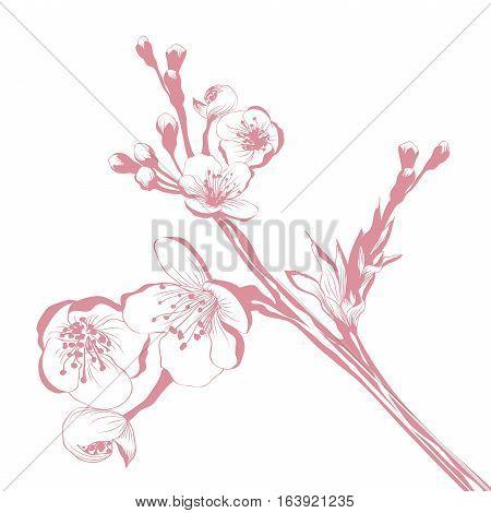 Vintage Cherry Blossom Branch Over White Background