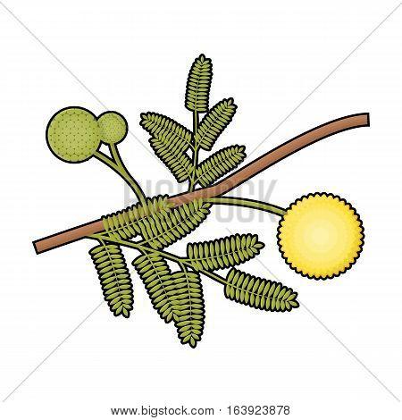Yellow mimosa flower icon in cartoon design isolated on white background. Australia symbol stock vector illustration.