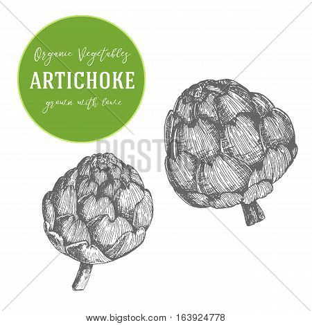 Vector illustration of artichoke. Hand drawn with ink vintage illustration