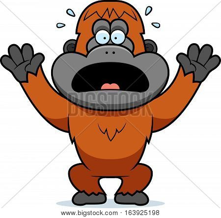 Cartoon Orangutan Panicking