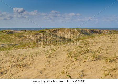 Dunes And Vegetation At Cassino Beach
