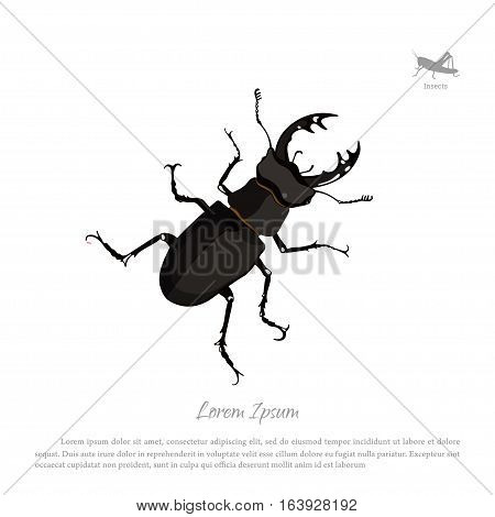 Detailed drawing of beetle deer. Black insect on a white background. Vector illustration