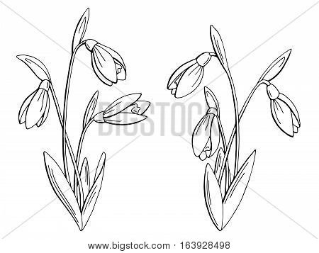 Snowdrop flower graphic black white isolated sketch illustration vector