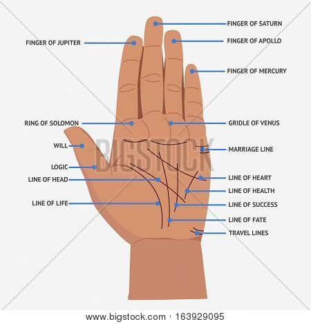 Palmistry. Open Hand Lines And Symbols Mystical Reading Vector Illustration