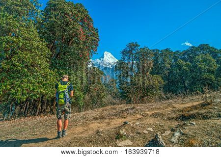 Trekking in Nepal. Man with the map on trekking on Annapurna mountain region Nepal with Machapuchare (Fish tail) view