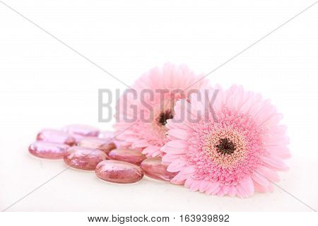 Two hot pink daisies and pink pebbles over white background