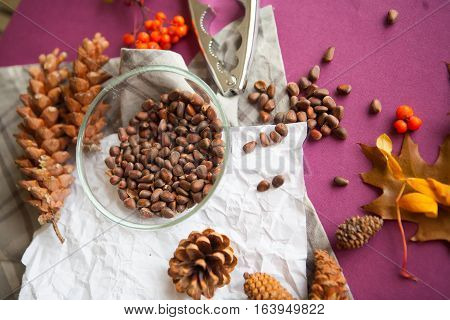 harvest of cedar cones and nuts on purple