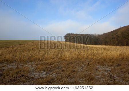 Dry Grasses And Woodland