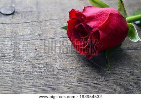 Rose on old wooden background for Valentine's Day with copy space.Valentine rose.St.Valentines Day,14 february concept.Selective focus.