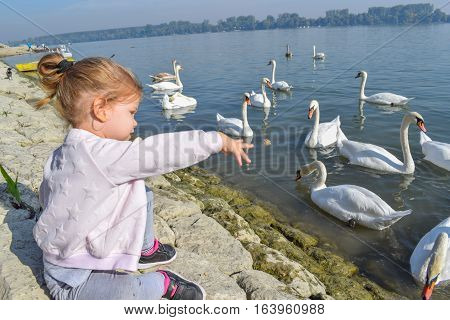 Little Girl Feeding A Swarm Of Beautiful White Swans On The River