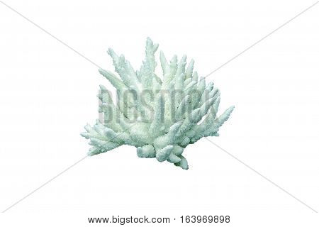 stone white corals as a flower on a white background