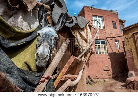 donkey in Abyaneh - one of the oldest villages in Iran