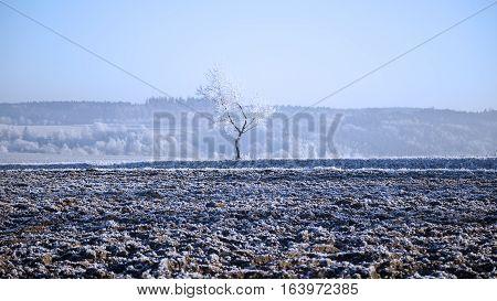 Rime on a tree winter snow january field