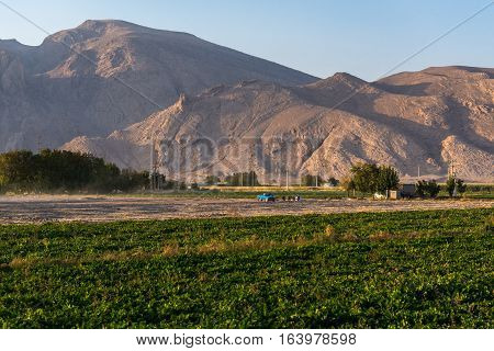 Potato field in agricultural area of Fars Province in Iran