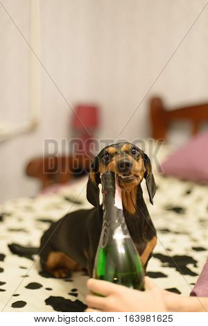 the dog with and a champaign bottle bed