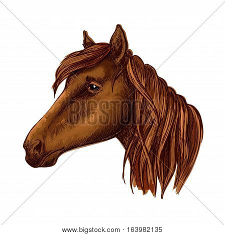 Brown horse head. Wild mustang muzzle with sad shiny eyes and wavy mane. Vector portrait