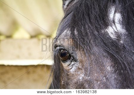 Horse's Eyes in the farm. The look.