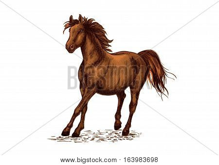 Arabian brown stallion galloping on horse races. Vector emblem of horse for sport racing. Ranch horse portrait. Strong bay mustang running freely in wild nature