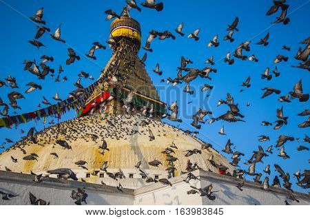 Crowding of pigeons are flying over the great Bodhnath stupa.