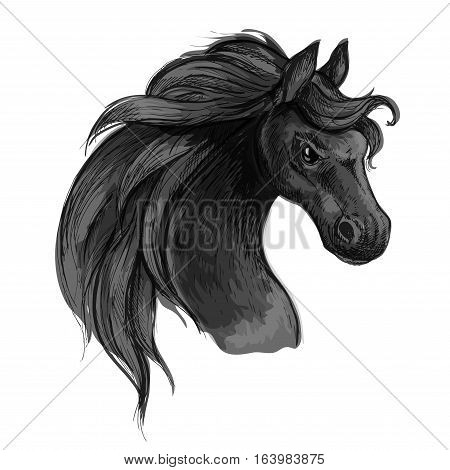 Furious wild black horse. Raging mustang with flared nostrils and burning fierce eyes. Vector sketch portrait