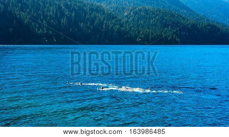 Crescent Lake in northwest Washington state with a pair of snorkelers just under the surface