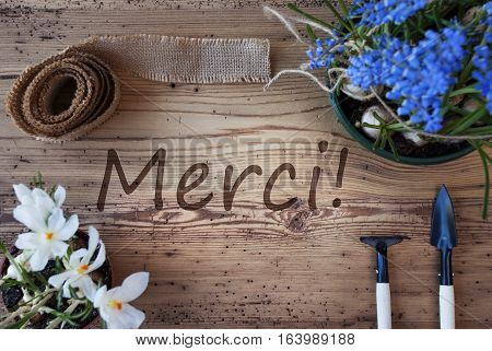 French Text Merci Means Thank You. Spring Flowers Like Grape Hyacinth And Crocus. Gardening Tools Like Rake And Shovel. Hemp Fabric Ribbon. Aged Wooden Background