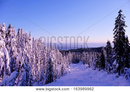 Sunset at winter. Snowcovered trees. Hollyburn Mountain. Cypress Provincial Park. North Vancouver. British Columbia. Canada.