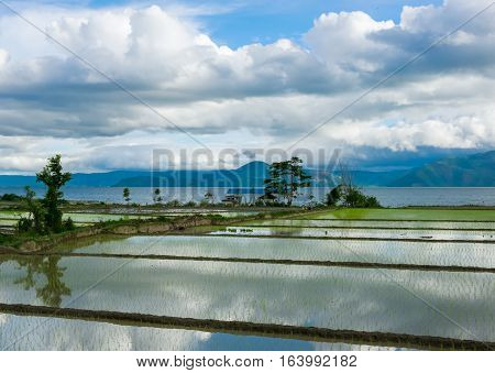 Rice fields covered with water and reflections of clouds on the Lake Toba, Sumatra, Indonesia