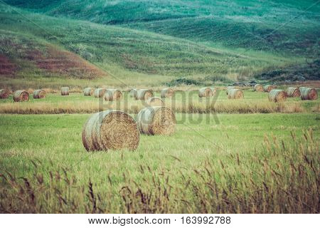 Round Hay Bales Scattered In A Field