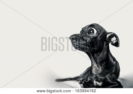 Close up shock face with some infomation of black dog