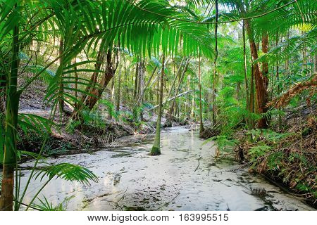 Tropical rainforest on Fraser Island, Queensland, Australia