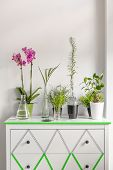 Cropped shot of house plants standing on a white chest of drawers decorated with washi tape poster