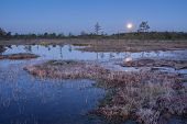 Sunrise in the bog. Icy cold marsh. Frosty ground. Swamp lake and nature. Freeze temperatures in moor. Blue fen. Muskeg natural environment. Sediment trees and frozen water. poster