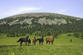 horses on the pasture in mountain region poster
