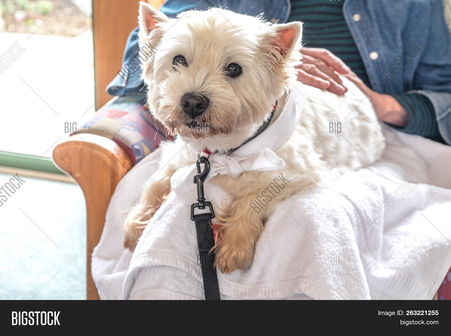 Therapy Pet Dog Image & Photo (Free Trial) | Bigstock