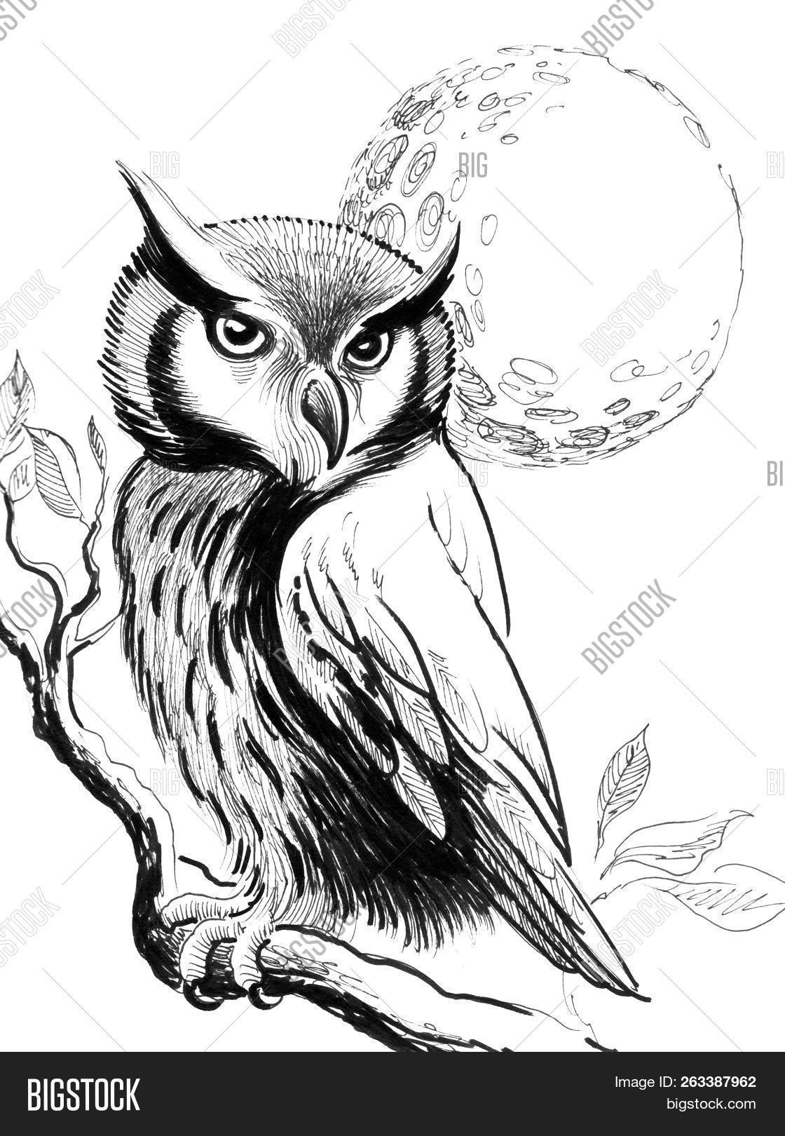 Owl Bird Sitting On Image Photo Free Trial Bigstock