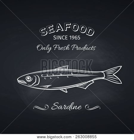 Hand Drawn Sardine Fish On Chalkboard. Seafood Icon Menu Restaurant Design. Engraving Style. Vector