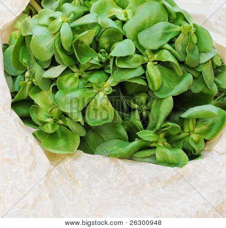 Organic purslane