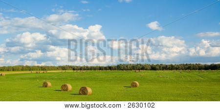 Panoramic Harvest Field