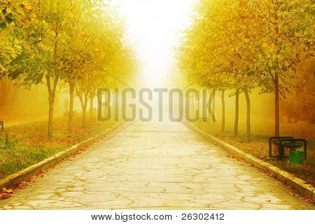 autumn park background