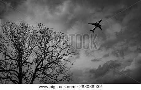 Silhouette Commercial Airplane On Grey Sky And Clouds With Death Tree. Failed Vacation. Hopeless And