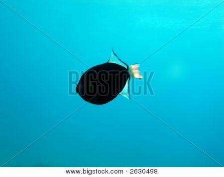 Swimming Reef Fish