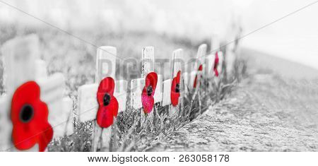 Grainy Black And White With Red Poppies Selective Focus - Remembrance Day Poppies On Wooden Crosses,