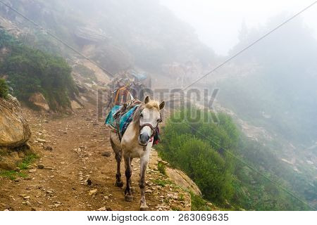 Mountain Mules On Foggy Trekking Path In Annapurna Conservation Area, Nepal