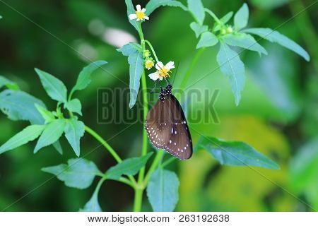 A Beautiful Of Butterfly, Black  Brown Butterfly