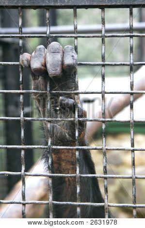 Monkey Hand Grabbing Metal Bars